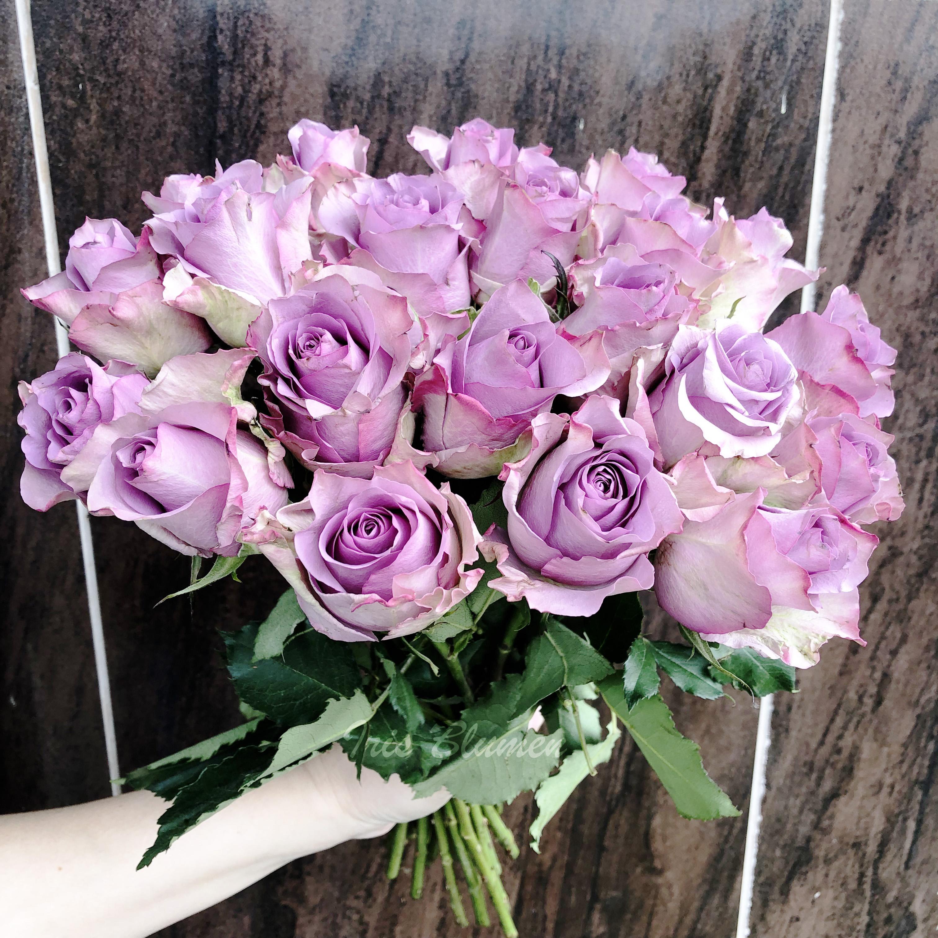 21 фиолетовая роза