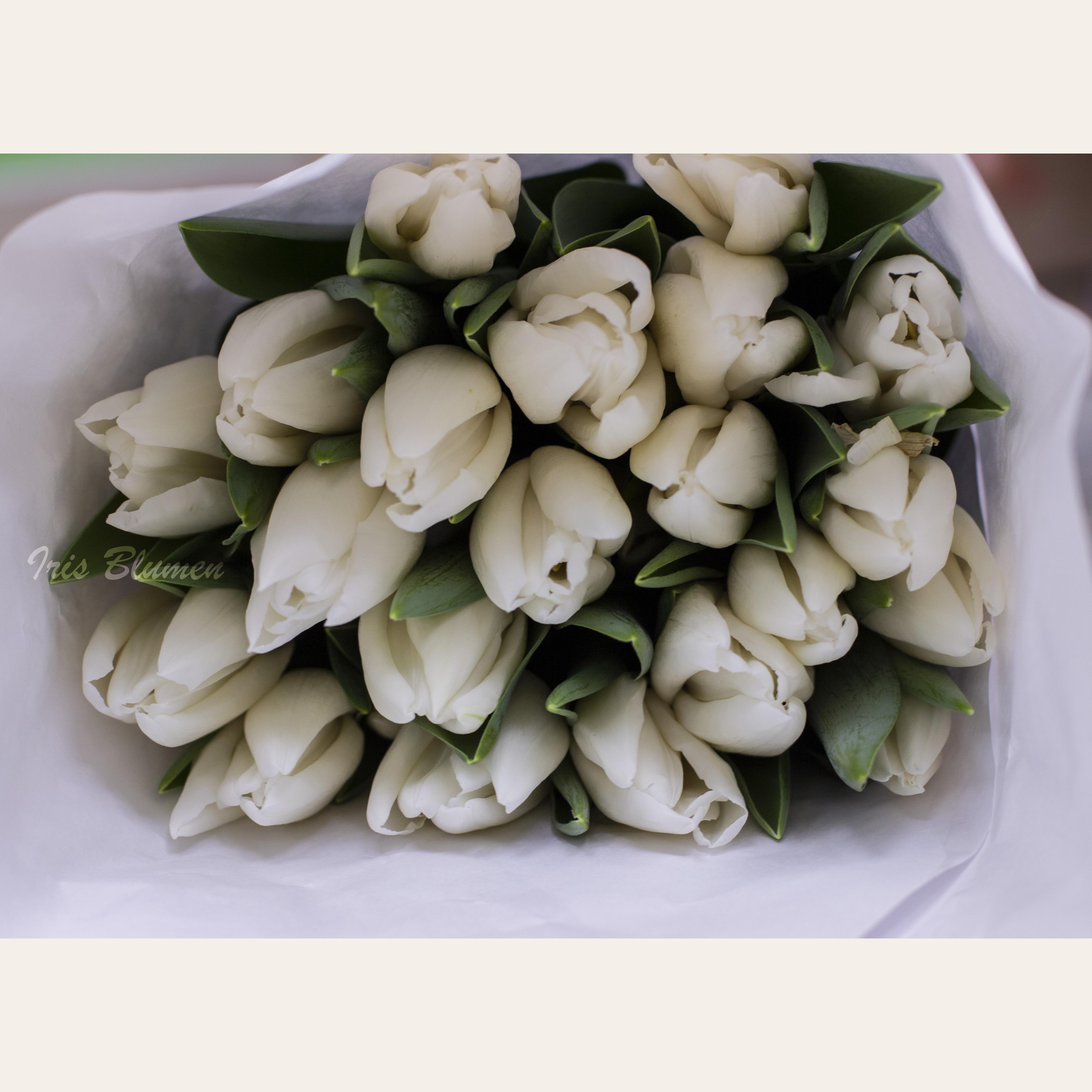 Белые тюльпаны Брянск