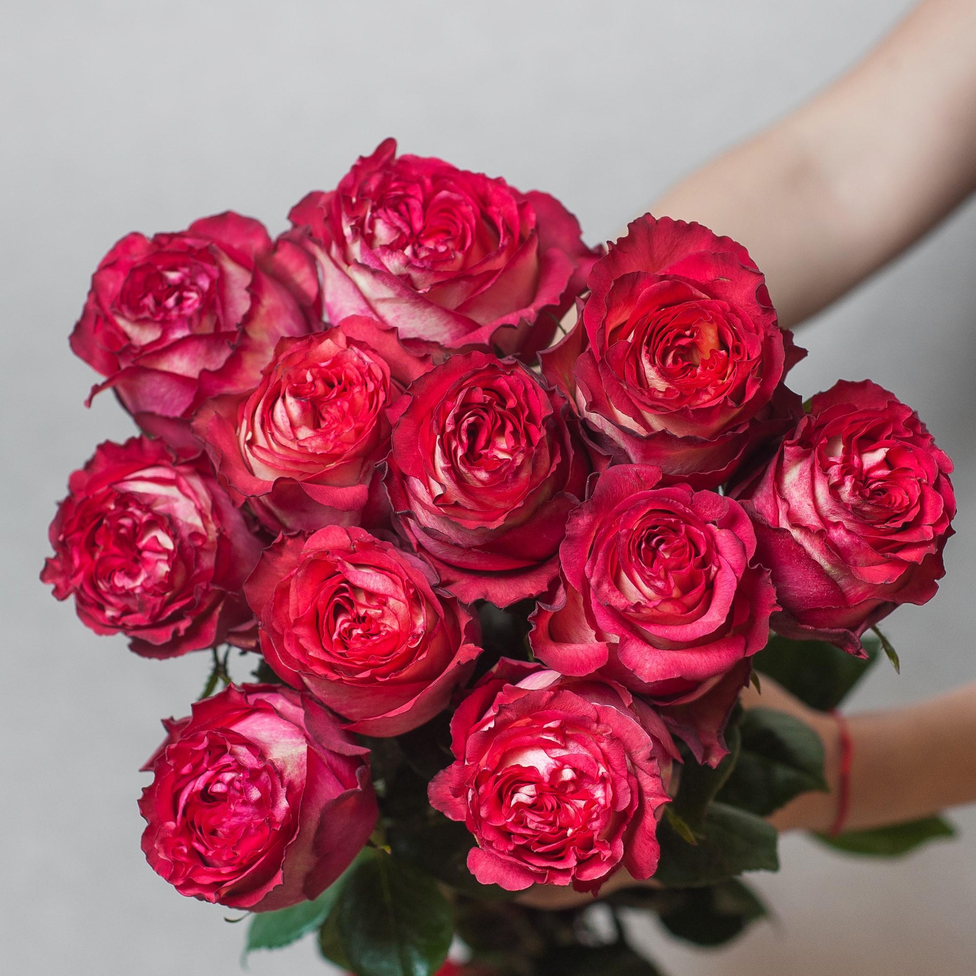 Розы красные купить в Брянске